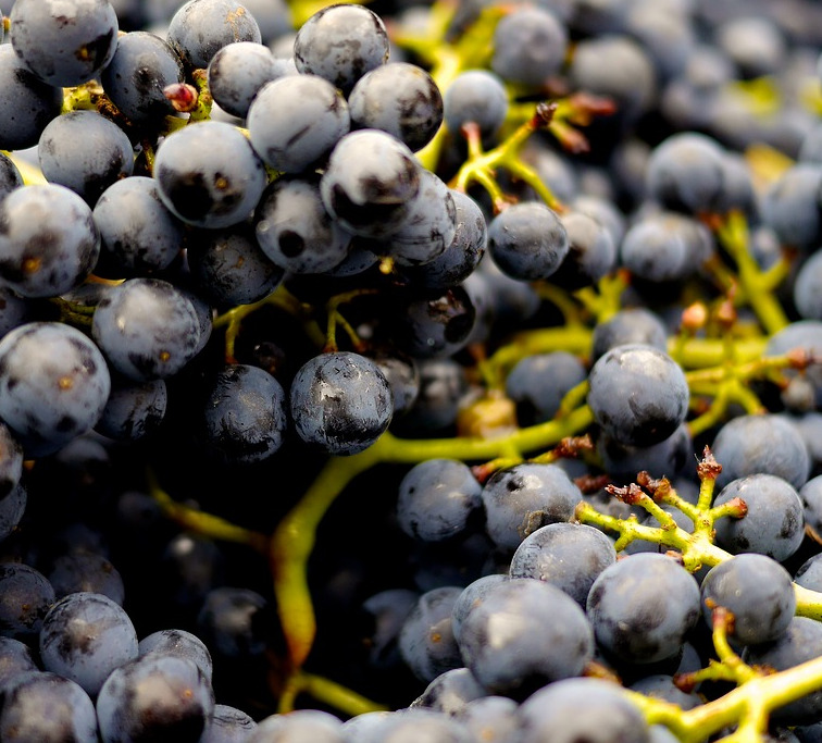 Tannine im Wein
