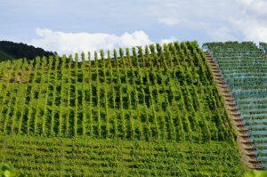 Anbaugebiet von Qualitästswein, Weingüteklassen