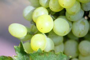 Chardonnay Rebsorte Wein auswählen