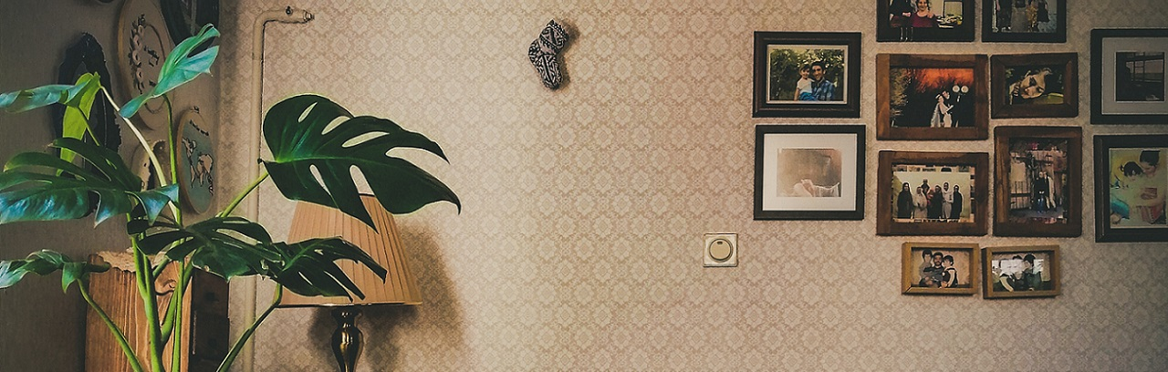 Wohnzimmer mit schattenliebender Zimmerpflanze - perfekter Standort für ein Weinregal